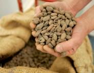 """De la fève au chocolat, un des thèmes abordés par la visite guidée """"Cacao et chocolat, petite et grande Histoire"""" (archives SO)."""